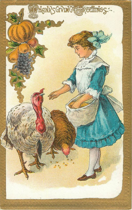 Thanksgiving Greeting Postcard - Girl feeding two turkeys