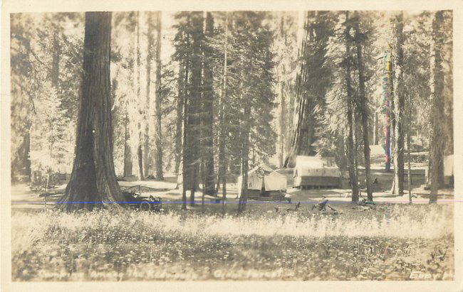Campsite in Redwood Giant Forest, A model Ford