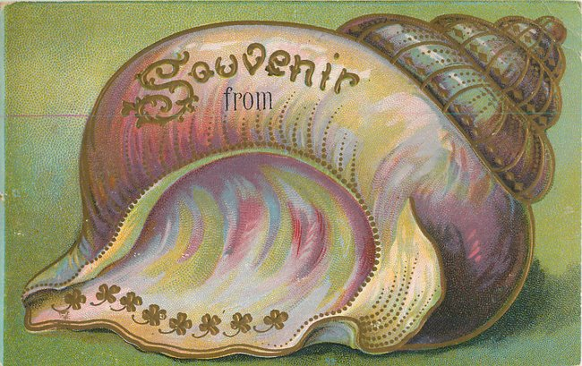 """Souvenir From"". Large conch seashell with gold outline (copy1)"