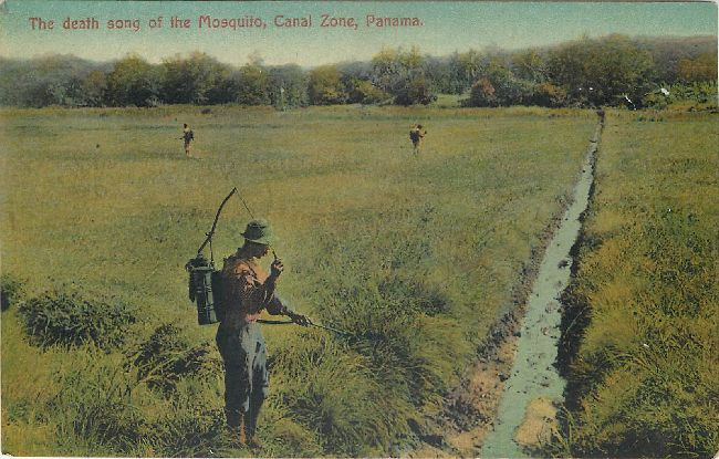 The Death Song of the Mosquito, Canal Zone, Panama Postcard