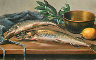 Sport of Fishing Postcard Large Fish on Table Never Postmarked