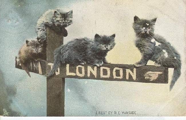 "CAT Postcard ""A Rest By The Wayside"" 1906"
