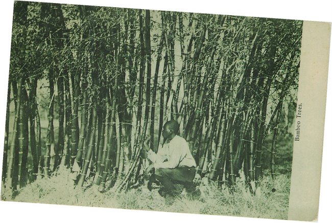 Black Americana Postcard - Bamboo Trees - No. 1141