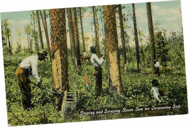 Black Americana Postcard - Dipping & Scraping Rosin Gum