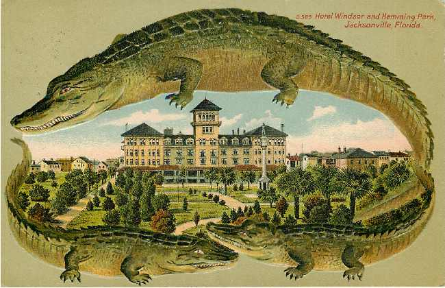 Alligator Border Hotel Windsor Jacksonville Florida Postcard