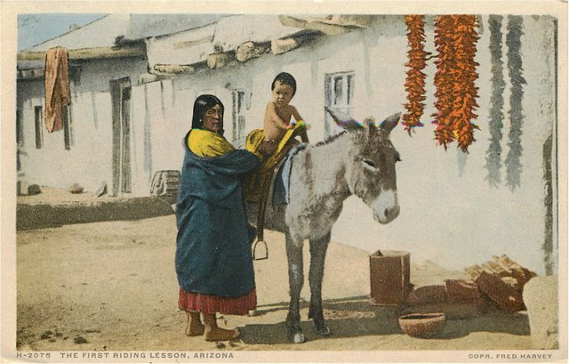Arizona Indian First Riding Lesson Child On Donkey Postcard