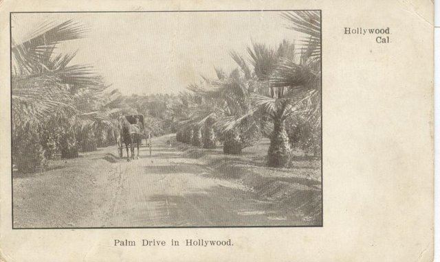Palm Drive in Hollywood - Hollywood, CA