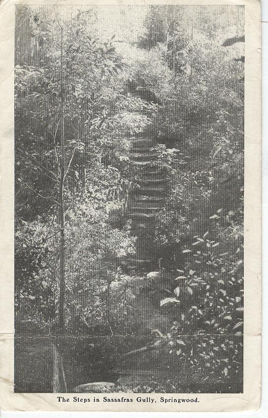 The Steps in Sassafras Gully, Springwood