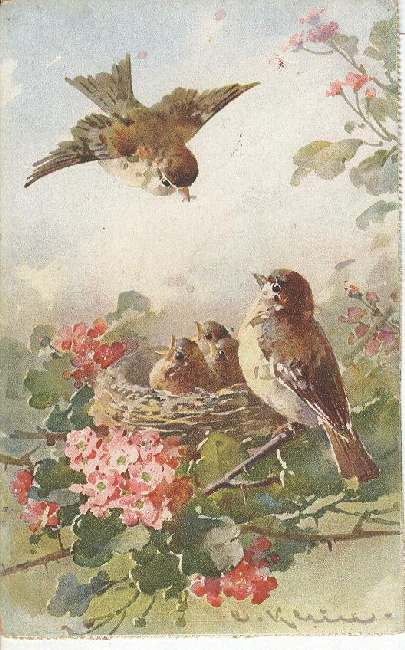 Artist Signed Postcard - C. Klein Robins With Babies in A Nest