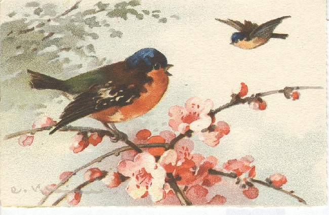 Artist Signed Postcard - C. Klein Bird on A Twig & Bird Airborn