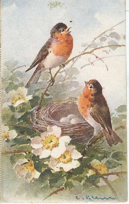 Artist Signed Postcard - C. Klein Birds With Eggs in a Nest
