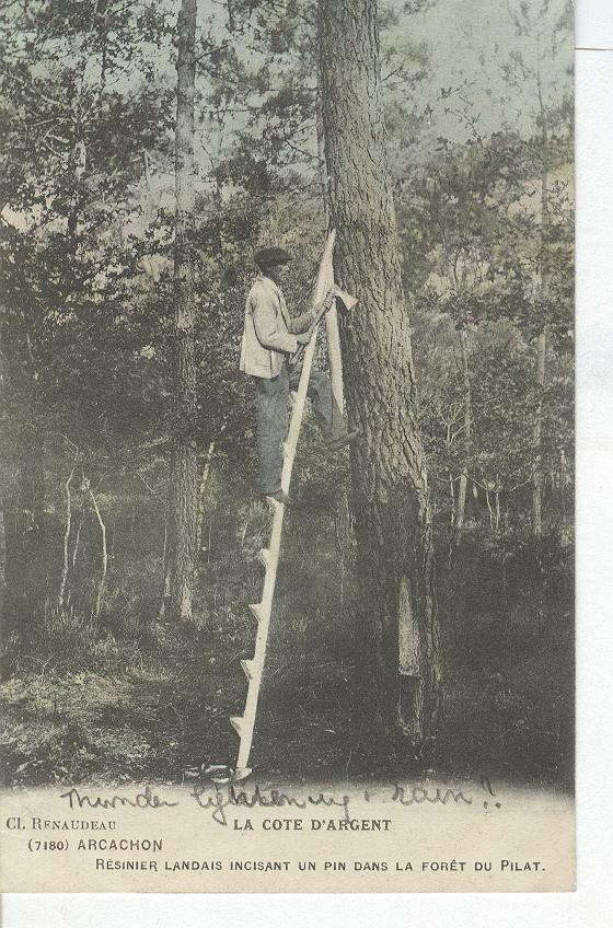 La Cote D'Argent-Man on ladder beside tree w/Ax