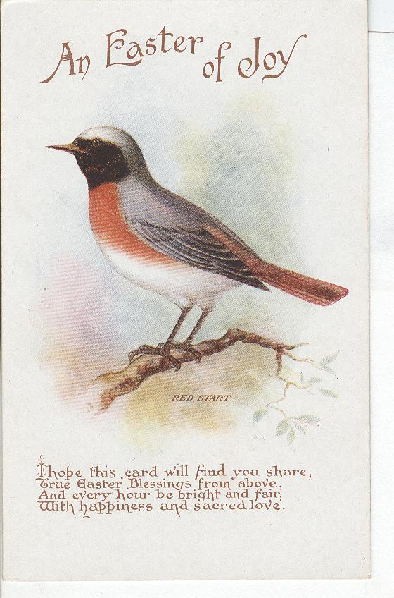 Easter Postcard - An Easter of Joy-Shows a Bird on a Limb