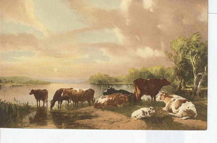 Animal Postcard - Cattle By The Pond...Sunset