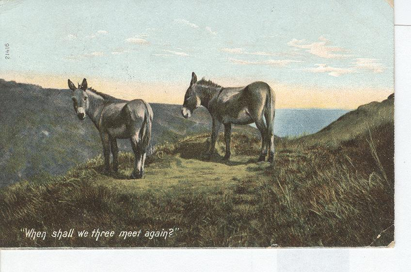 Two Donkey's on The Mountain Side