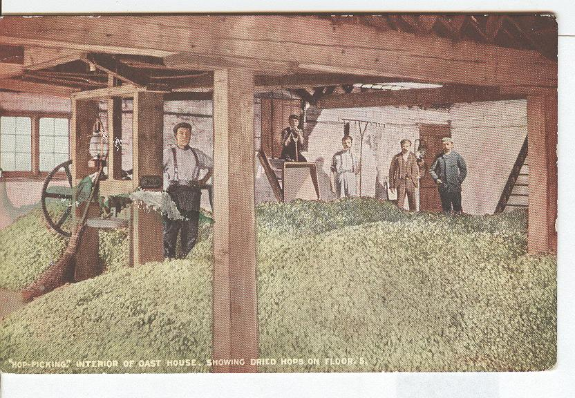 """Hop Picking"" Interior of Oast House Showing Dried Hops on Floor"